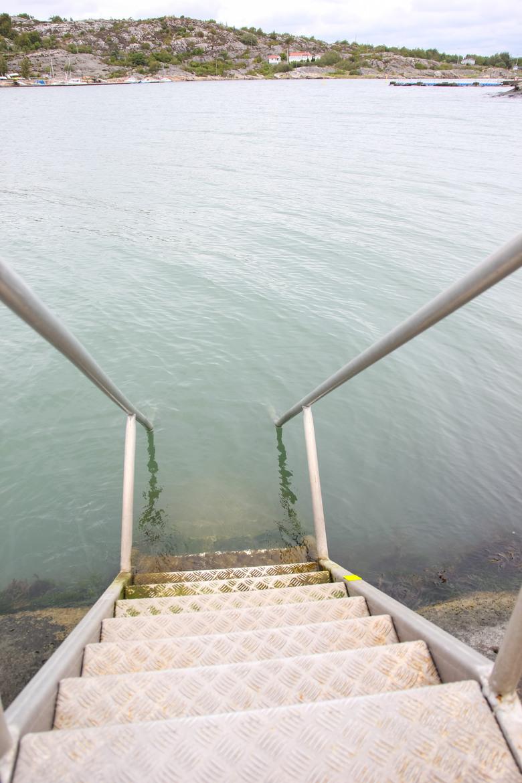 Rostfiske i ankdammen